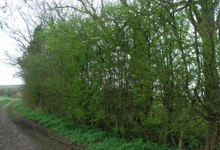 Fitzwilliam Road