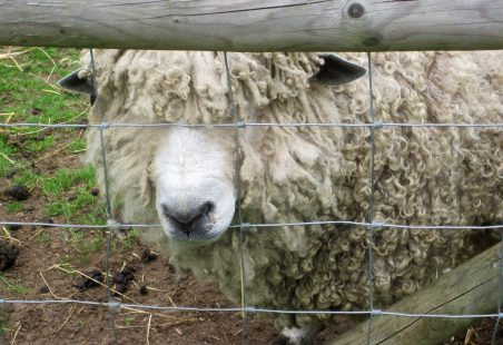The Big Day Out - Rare Breeds Centre