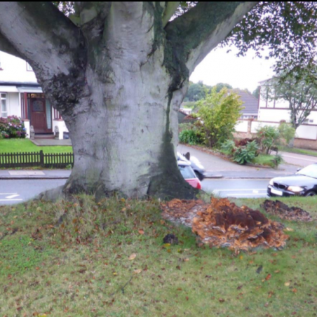 Middle aged tree in hazardous condition | Arbtech Consulting Ltd
