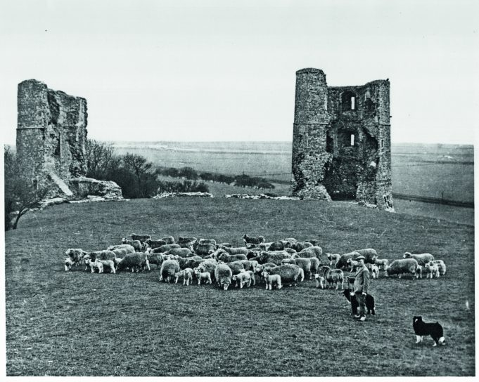 Hadleigh's Last Shepherd, Fred Wanstall, pictured at Hadleigh Castle in about 1935 | 2nd Generation Copy, property of Mrs Hazel Wanstall