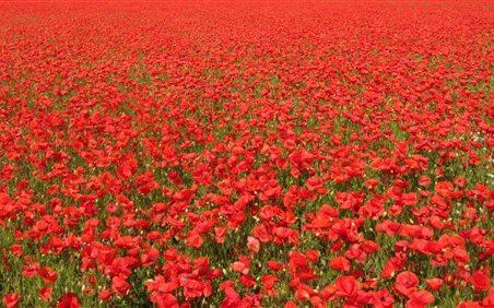 Hadleigh & Thundersley WW1 Roll of Honour (Surnames A-E)