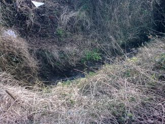Remains of ditch at the lower end of Castle Lane. | Nick Turner.