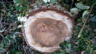 50cm diameter | Terry Barclay