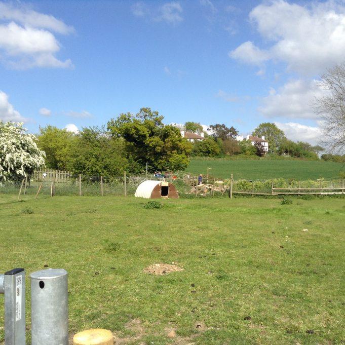 Hadleigh Farm - rare breeds hiding | Susan Wells