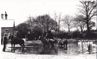 Park Farm watering the Shire horses
