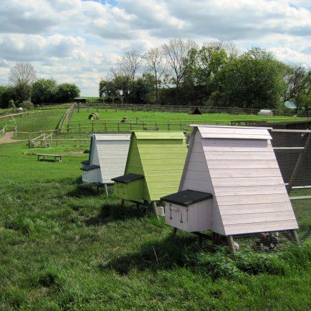 Chicken beach huts? | Lynda Manning