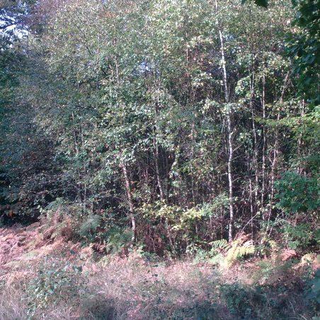 Dodds Grove in October   NT