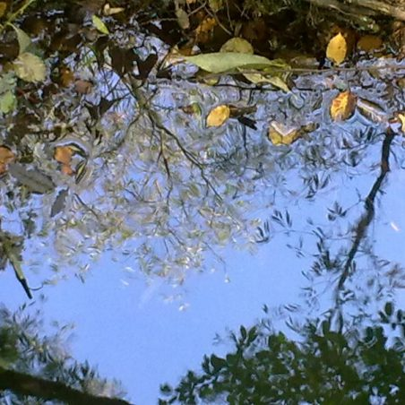 Prittle Brook reflection | NT