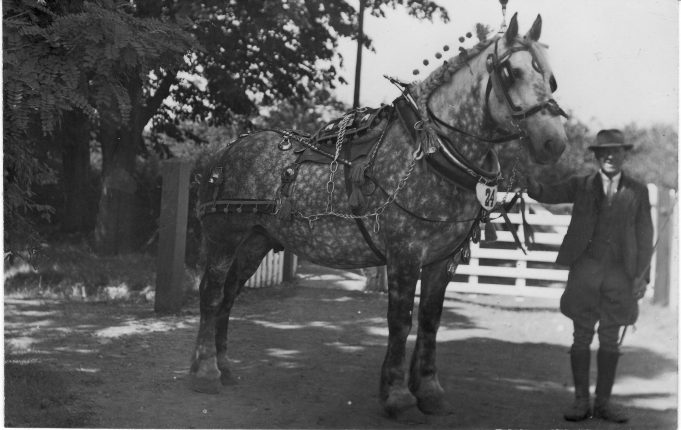 Harry Hopgood with Percheron horse | Graham Cook Collection