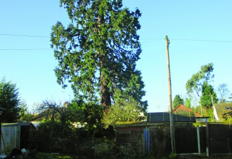 Thundersley's Biggest Christmas Tree