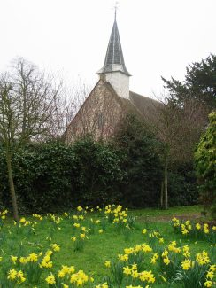 Daffodils and St James the Less | NT