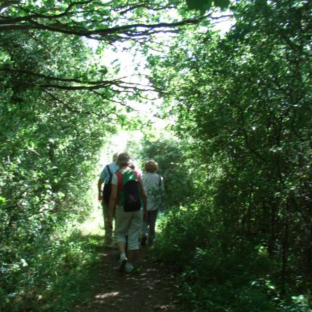 Thundersley Walks