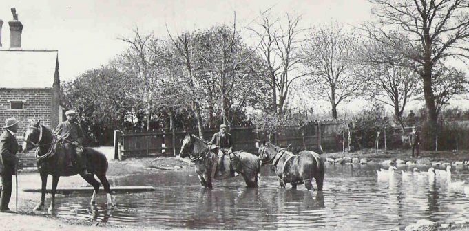 Watering the Shire horses at Park Farm pond | SA Archive