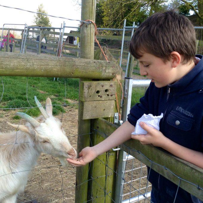 Feed the animals | Susan Wells