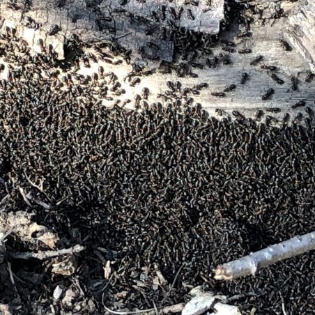 Look out for ant nests. | Graham Cook