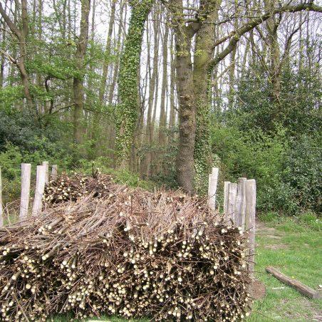 Woodland management   Kathy