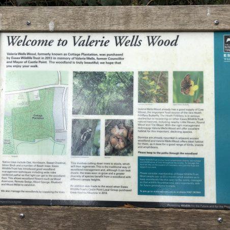 Valerie Wells Wood | G Cook