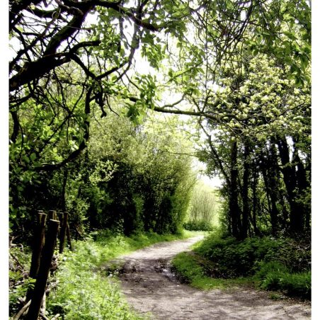 Spring pathway Tile Wood   Kathy