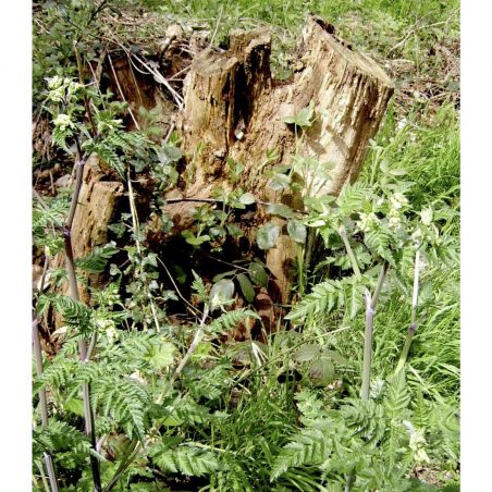 Stump being recycled | Kathy