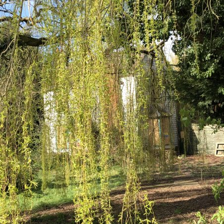 Beautiful willow tree at the entrance. | Graham Cook