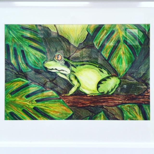 Frog, watercolour pencils, by Nikkii