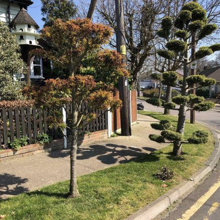 Fairmead Avenue, well looked after verge. | Graham Cook