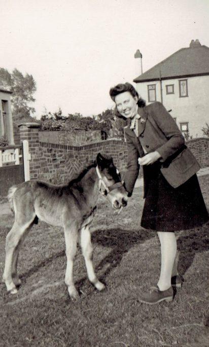 Donkeys in Wyburn Road | Richard Burgess