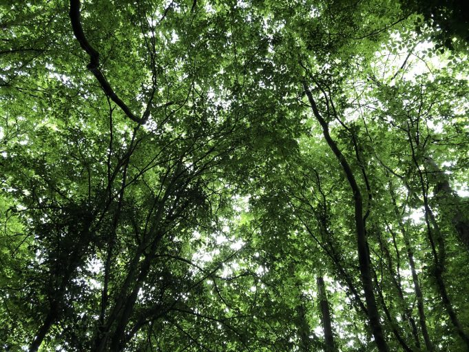 Pound Wood's variety of tree species. | Graham Cook