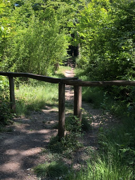 A junction in the walkway. There is one public bridleway which circles through Pound Wood, other cleared pathways are permissive. | Graham Cook