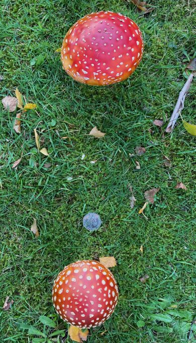 Garden also has fungi | MW
